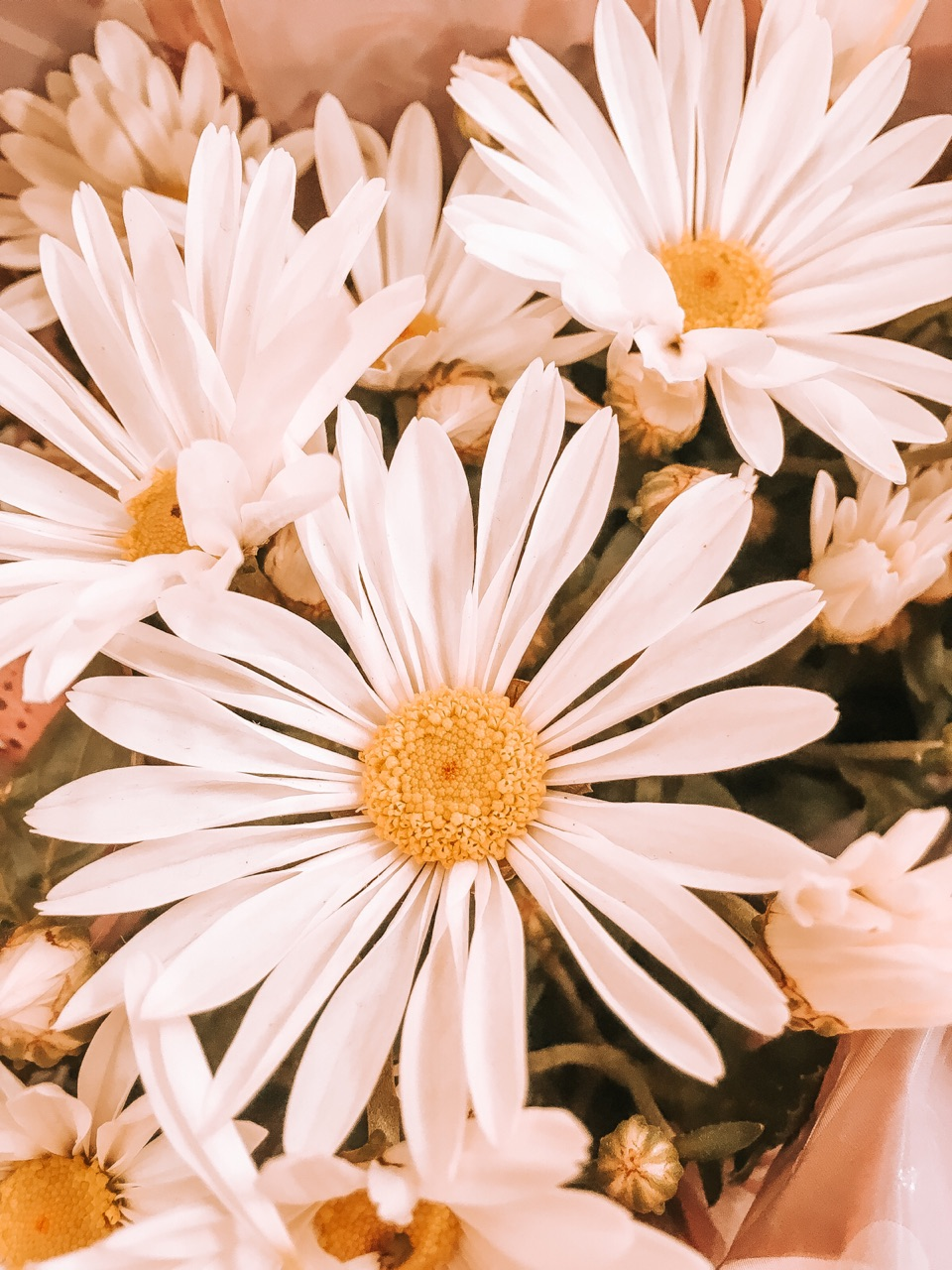 aesthetic, flowers, and inspiration image