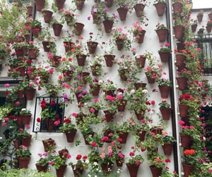 flores, 2021, and macetas image