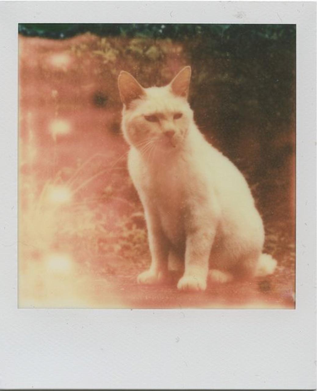 old photo, polaroid, and polaroid picture image
