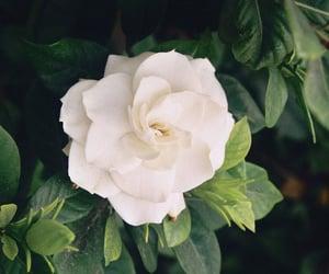 The Rose Garden ღ