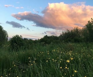 flowers, nature, and clouds image