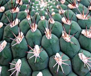 cactos and plantas image
