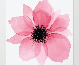 pink flowers, pink poppy, and home decor art image