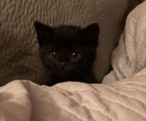 cat, kitten, and slept image