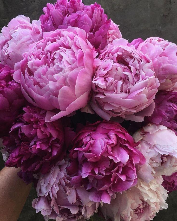 beautiful, lifestyle, and pink image