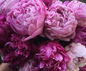 beautiful, colors, and peonies image