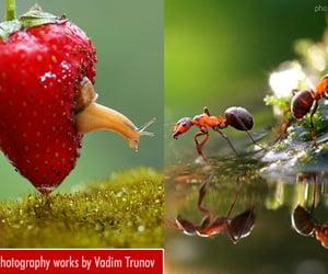 macro, macro photography, and photography image