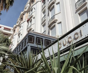 cannes, gucci, and palm tree image