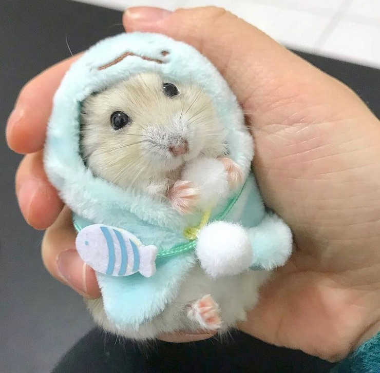 article, cute, and hamsters image