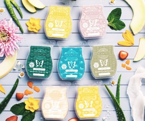 scentsy, wax melts, and scented wax image