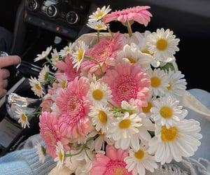 flower, gerbera, and daisy image