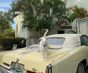 cat, car, and aesthetic image