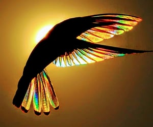 birds, colour, and hummingbird image