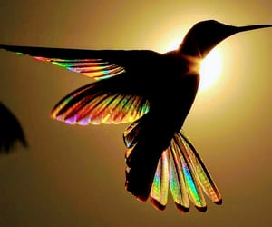 birds, colour, and feathers image