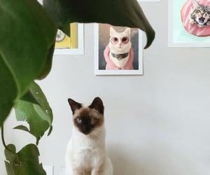 art prints, cats, and Gatos image