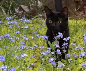 Cute black cat with flowers 💐  in the field #cat #animal