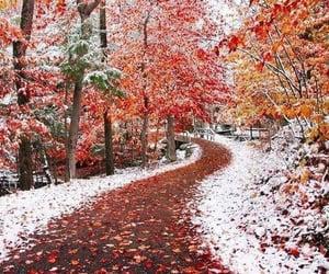 autumn colors, landscape, and nature image