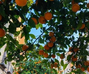 europe, fruit, and nature image