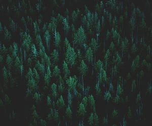 forest, trees, and unsplash image