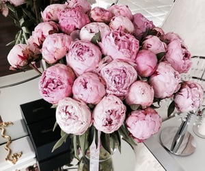 flower, roses, and natur image