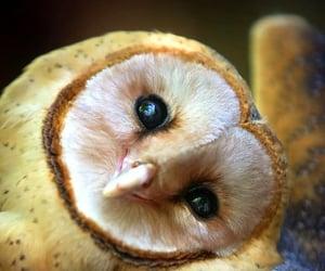 animal, owl, and go vegan image