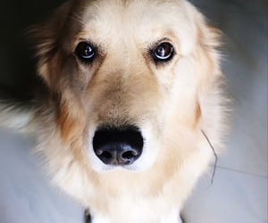 dog, pet, and oreo image