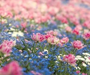 flowers | Love flowers, Beautiful flowers, Flowers