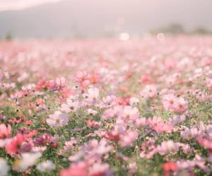 Fields of Dreams | Flowers photography, Flower aesthetic, Nature pictures  flowers