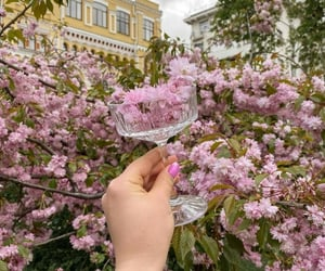A glass filled with spring   @eve365