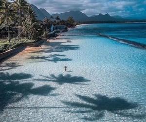 beach, hawaii, and palm trees image