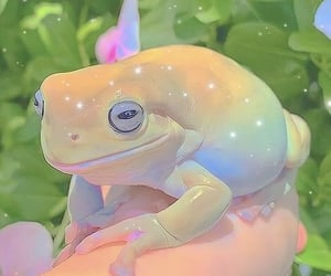 aesthetic, colorful, and frog image