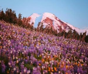 Wild Flower field, Mount Baker   @eve365