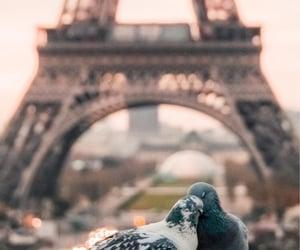 animal, paris, and love image