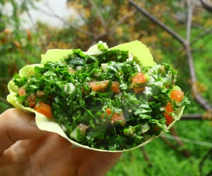 article, healthy lifestyle, and salad recipes image
