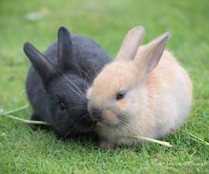 best friend, best friends, and bunnies image