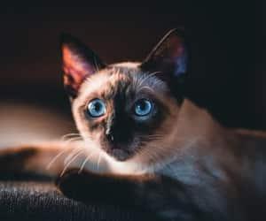 so photogenic