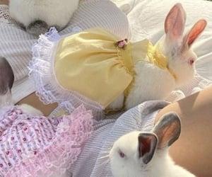 bunny, aesthetic, and rabbit image