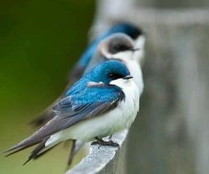bird, animal, and blue image