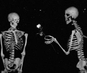 dark, rose, and skeleton image