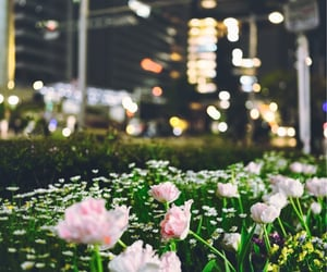 flower, rose, and 夜景 image