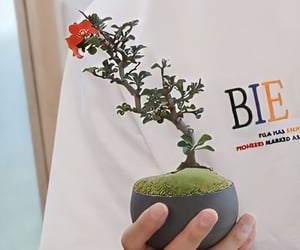 bonsai, photo, and plum blossom image