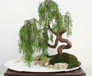 beautiful, bonsai, and plant image