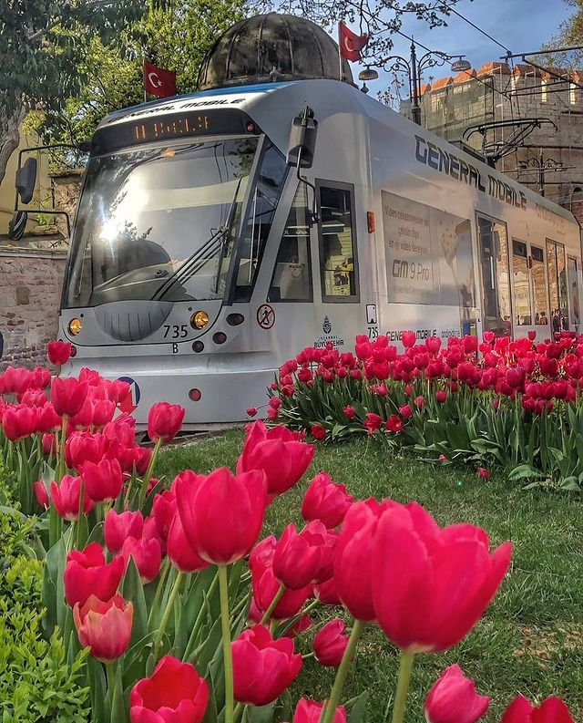 flower, train, and tulips image