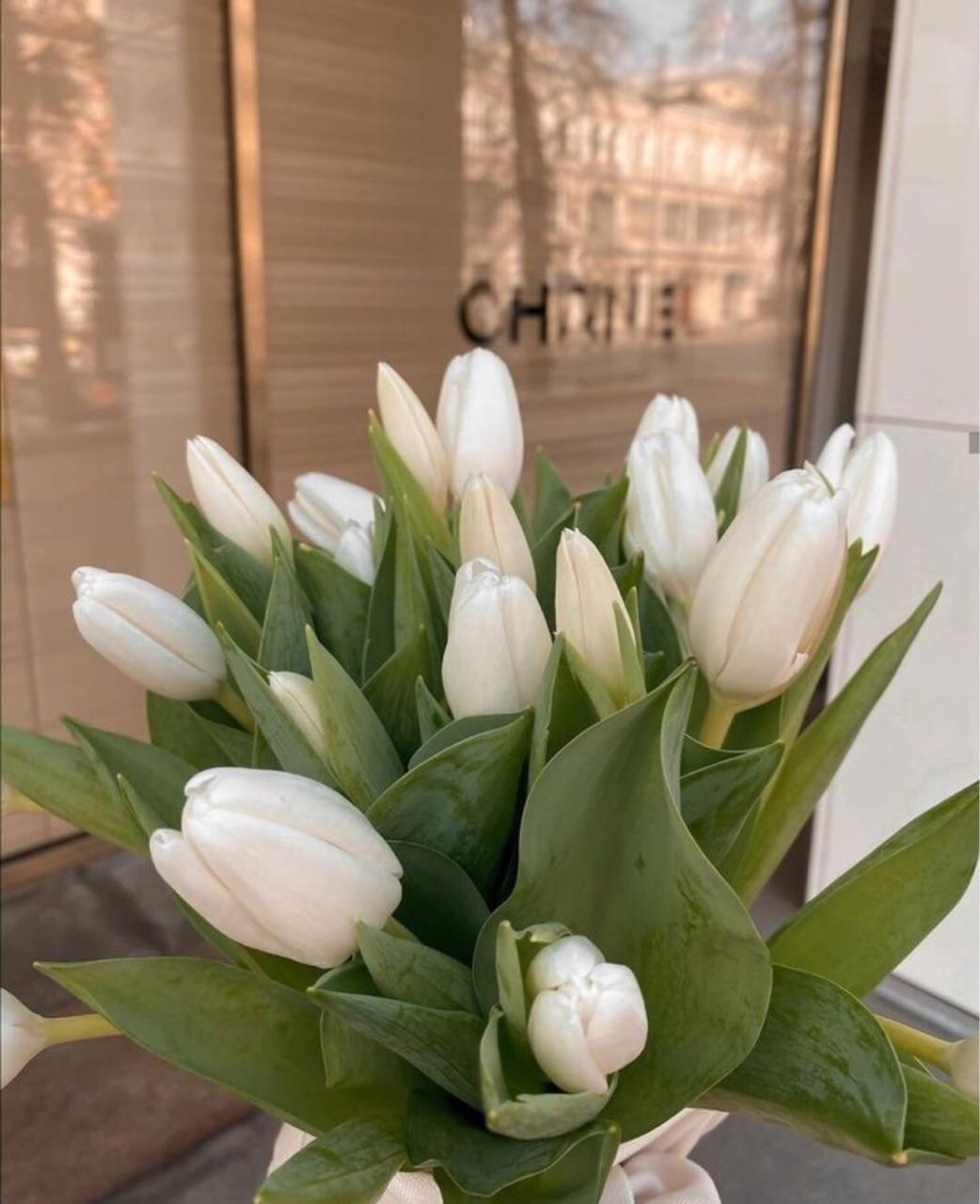 flowers, aesthetics, and tulips image