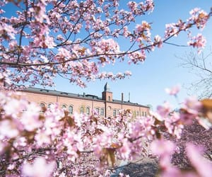 finland, spring, and 桜 image