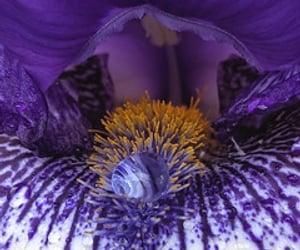 close-up, iris, and bulb image