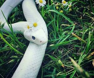 daisy, snake, and happy image