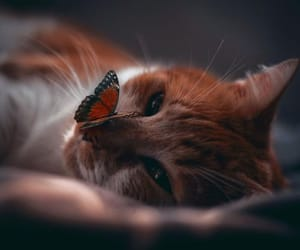 Beauty and the Butterfly~