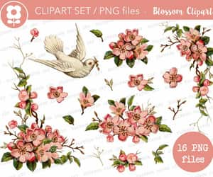 vintage graphics, clipart flowers, and transparent flower image