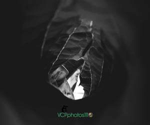 aesthetic, black and white photography, and leaf image